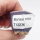 Mini Bonsai Schüssel - 3/3