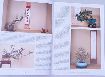 Bonsai und Japanischer Garten Nr.48 - 3