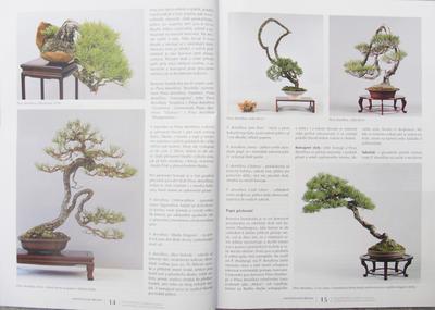 Bonsai und Japanischer Garten Nr.51 - 3