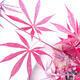 Outdoor Bonsai - Acer Palme. Atropurpureum-rotes Palmblatt - 3/3