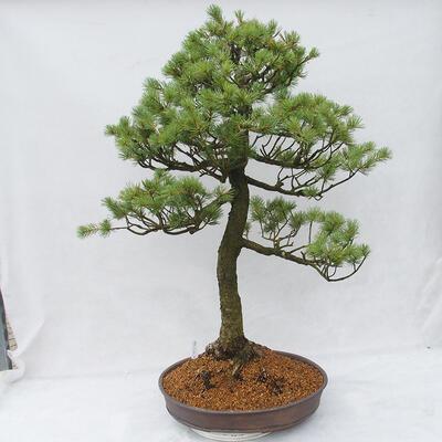 Bonsai-Schale 38 x 30 x 8 cm, graublaue Farbe - 3