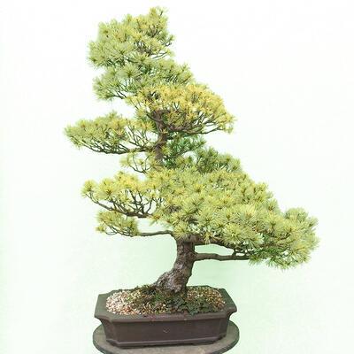 Bonsai-Schale 29 x 23 x 8,5 cm, grau-beige Farbe - 3