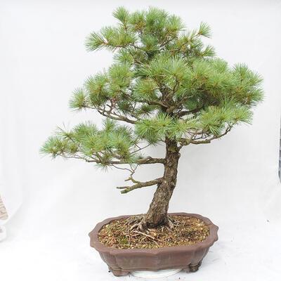 Bonsai-Schale 26,5 x 19,5 x 8 cm, graue Farbe - 3