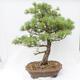 Bonsai-Schale 26,5 x 19,5 x 8 cm, graue Farbe - 3/5