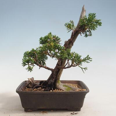 Bonsai-Schale 31 x 24 x 10 cm, Farbe beige-grau - 3