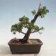 Bonsai-Schale 31 x 24 x 10 cm, Farbe beige-grau - 3/5