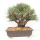 Keramische Bonsai-Schale 10,5 x 9 x 4,5 cm, Farbe braun-grün - 3/3