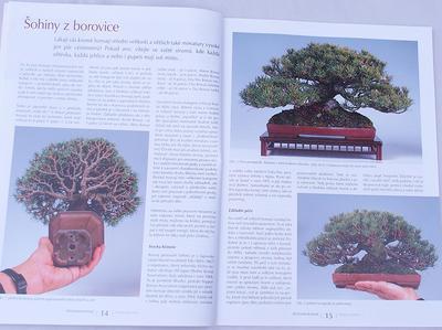 Bonsai und Japanischer Garten Nr.48 - 4