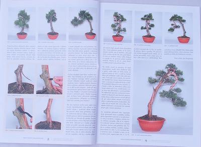 Bonsai und Japanischer Garten Nr.49 - 4