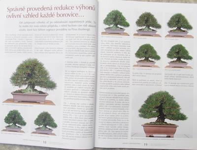 Bonsai und Japanischer Garten Nr.51 - 4