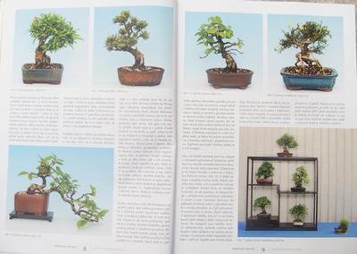 Bonsai und Japanischer Garten Nr.52 - 4