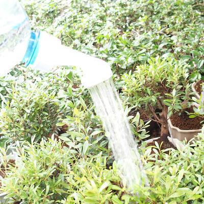Bonsai-Flaschensprinkler aus Kunststoff 20 Stück - 4
