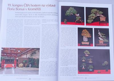 Bonsai und Japanischer Garten Nr.48 - 5