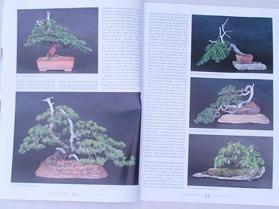 Bonsai und Japanischer Garten Nr.49 - 5