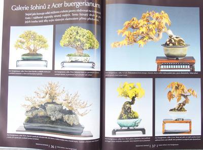Bonsai und Japanischer Garten Nr.51 - 5