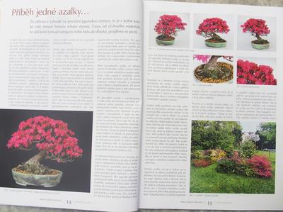 Bonsai und Japanischer Garten Nr.52 - 5