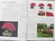 Bonsai und Japanischer Garten Nr.52 - 5/7