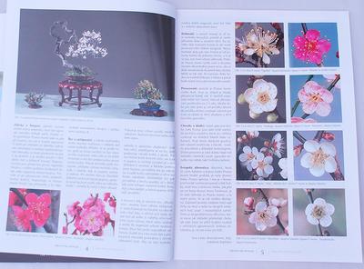 Bonsai und Japanischer Garten Nr.49 - 6