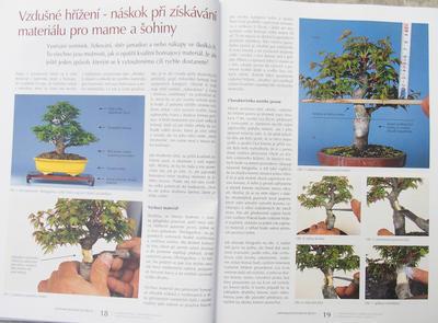 Bonsai und Japanischer Garten Nr.52 - 6