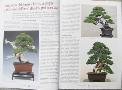 Bonsai und Japanischer Garten Nr.52 - 7
